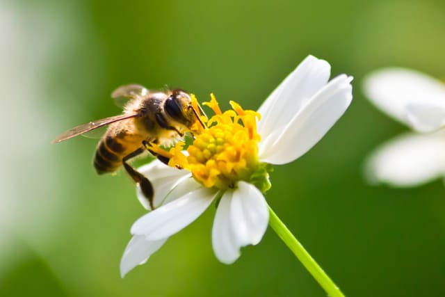 antenna-white-bee