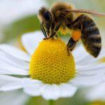 Alergias respiratórias aumentam na Primavera
