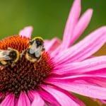O que são alergias e quais os principais tipos